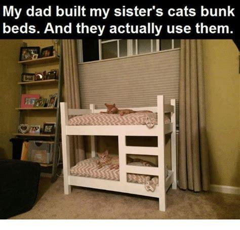 cat bunk beds for sale 25 best memes about bunk beds bunk beds memes