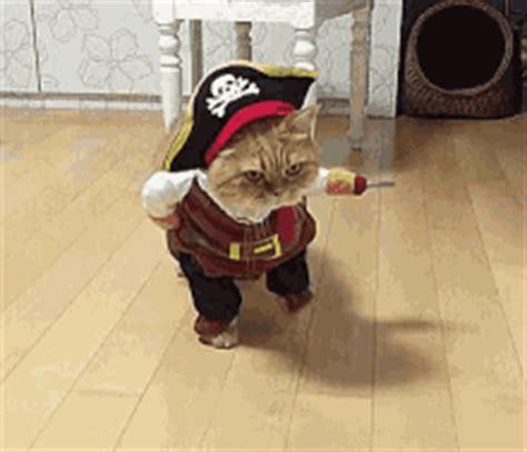 workaholics pug costume gifs tenor