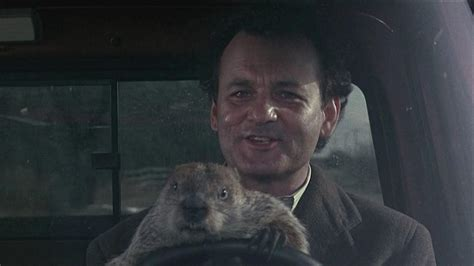groundhog day ultra hd groundhog day wallpapers wallpaper cave