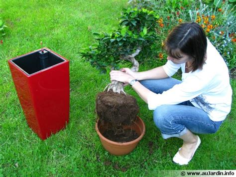 rempoter les plantes d int 233 rieur