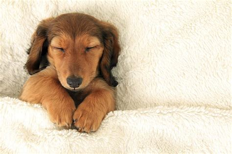 do dogs sleep why do dogs sleep all the time cuteness