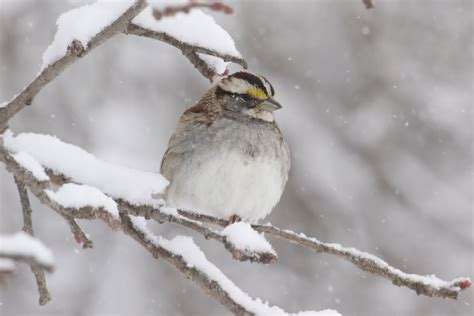 winter birds to observe on cape cod