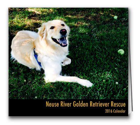 neuse golden retriever rescue animal rescue