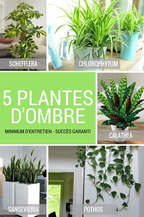 Plantes D Interieur Decoration by Plante D Int 233 Rieur D Ombre Lesquels Choisir