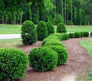 Bushes For Landscaping Trees Shrubs Merrill Landscaping