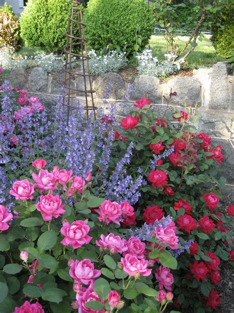 backyard flowers brookland s hidden gardens a secret no more the