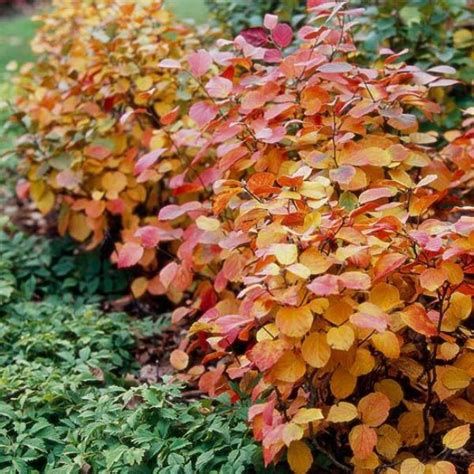 top 5 fall shade perennials gardener and landscape 10 best plants for your autumn garden