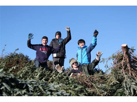 boy scouts hold christmas tree pickup fundraiser