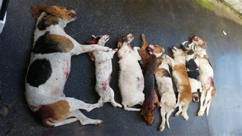 attacks other dogs 60 of farms suffer from attacks 96 would shoot attacking dogs on sight agriland