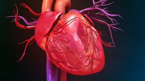 The Heartbreaker by The Secret To Building A Strong Blood Vessels