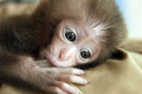 Cute monkey Pictures, cute monkey Images   tedlillyfanclub