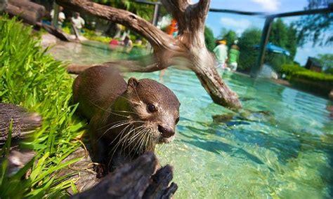 Busch Gardens Gift Cards - seaworld orlando busch gardens seaworld orlando and busch gardens ta groupon