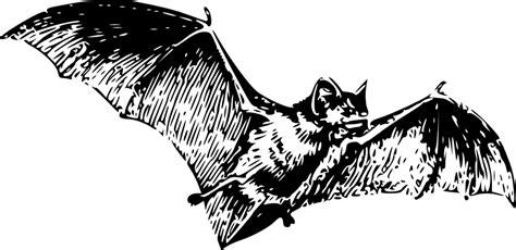 bat tattoo png bat tattoos tattoo designs tattoo pictures page 8