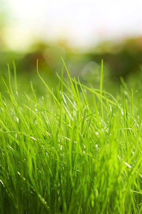 colors  nature green grass grass wallpaper hd nature