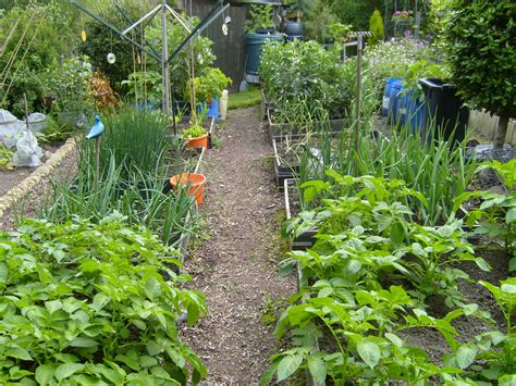 How To Start Vegetable Gardening In A Small Backyard Starting A Small Vegetable Garden