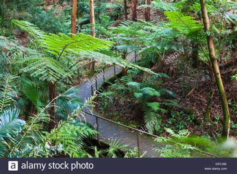 Australian National Botanic Gardens Rainforest Gully Area At The Australian National Botanic Gardens Stock Photo Royalty Free Image