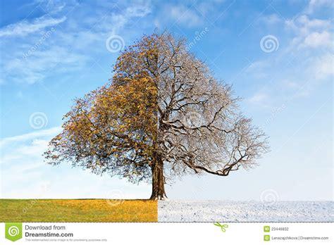imagenes arboles invierno oto 241 o del 225 rbol del collage contra invierno fotograf 237 a de