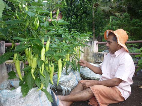 window  knowledge terrace vegetable garden  kurakar house