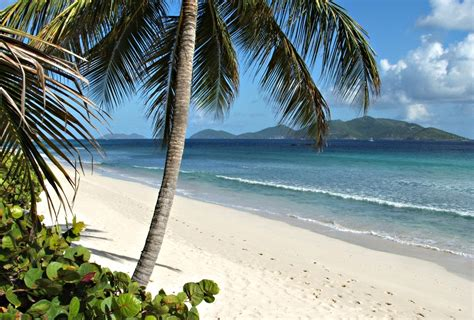 tropical beach with coconut palm and seagrapes
