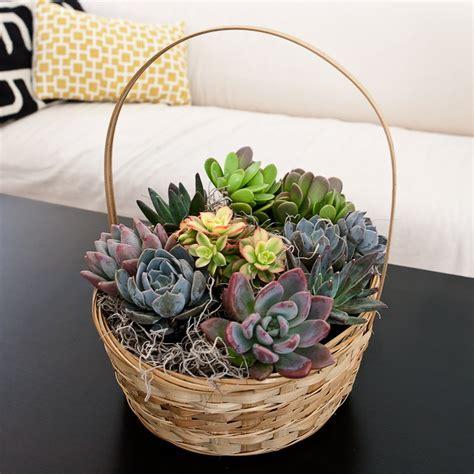 Succulent garden in natural rattan basket succulents amp cactus by plant type givingplants com