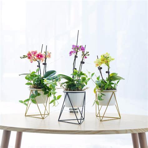 decorative planter pots indoor modern garden white ceramic