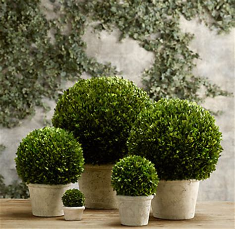 Restoration Hardware Planters by Preserved Boxwood Globes