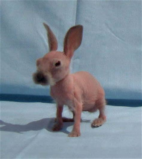 Treasure of our life : The Hairless Pets ..