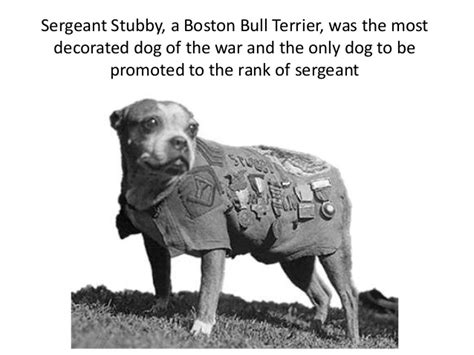Sergeant Stubby Information Fifty Fantastic Facts From The World War