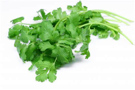 Cilantro Detox Properties by Health Tips 22 Health Benefits Of Coriander