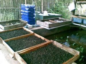 Cacing Tanpa Bibit kumpulan budidaya budidaya cacing tanah