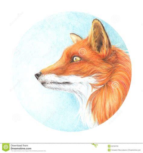 imagenes de zorros a lapiz cabeza coloreada dibujada de dibujo del zorro de los
