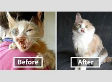 Adults Were Terrified To Look At The Kitty, Until A 7-Year ... Ugly Girl Facebook