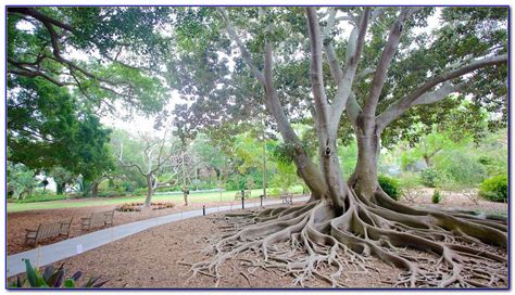 Botanical Gardens Sarasota Fl Selby Botanical Gardens Sarasota Fl Page Home Design Ideas Galleries Home