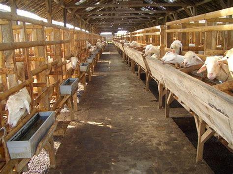 negara penghasil susu kambing etawa terbaik