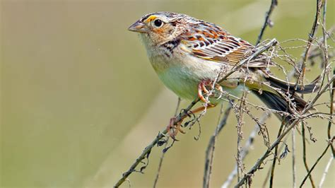 birds and birders find a welcome refuge at monocacy