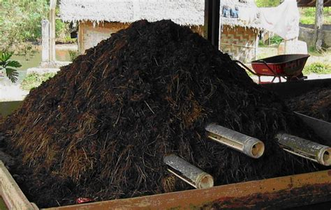 Pupuk Kotoran Sapi Untuk Sawit pupuk kandang kotoran sapi sebagai media cacing tanah