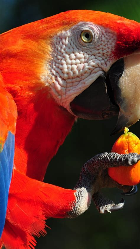 wallpaper macaw parrot tropical bird animals