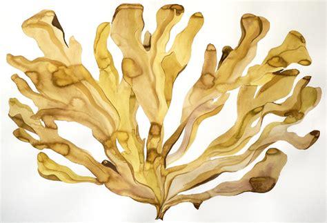 Brown Algae Detox by Idoline Duke Artist