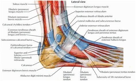 diagram of foot printable diagrams of the foot diagram site