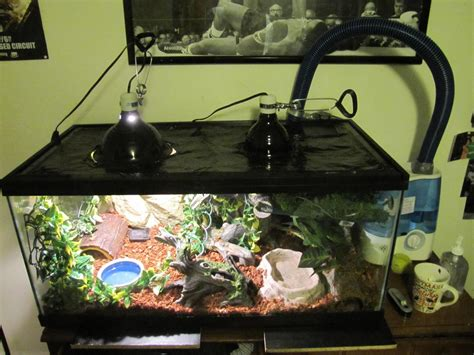 setter decorator python lets see your tank setup for your reptiles page 2