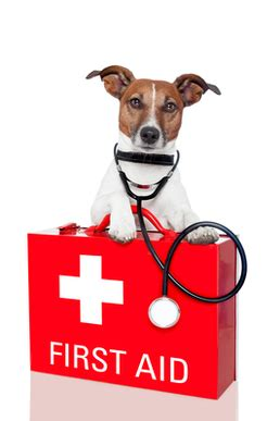 best puppy insurance research the best pet insurance companies and get a quote