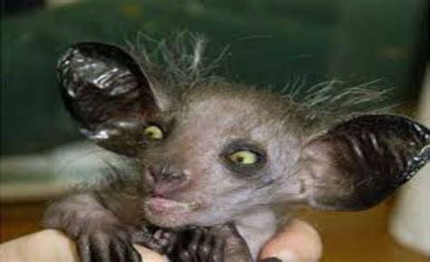 imagenes de animales feos del mundo los diez animales m 225 s feos del mundo taringa
