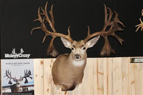 Idaho State Records 20 Of The Largest Mule Deer Of All Time Gohunt