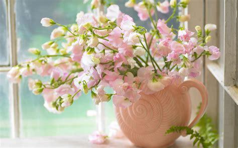 wallpaper sweet flower pink sweet peas in a vase wallpaper 878