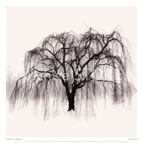 weeping willow tree tattoo willow tree drawing weeping willow tree drawings pic 20