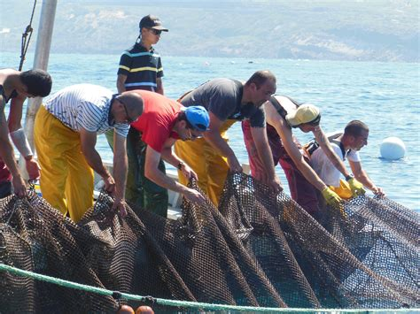 Kaos National Geographic Traditional Boat a sustainable tuna fishery traditional trap fishers in sardegna say yes national geographic