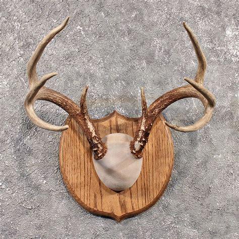 deer antlers search cards
