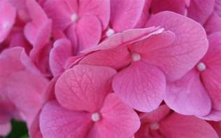 Pictures Of Pink Flowers - pink flower wallpaper 36359