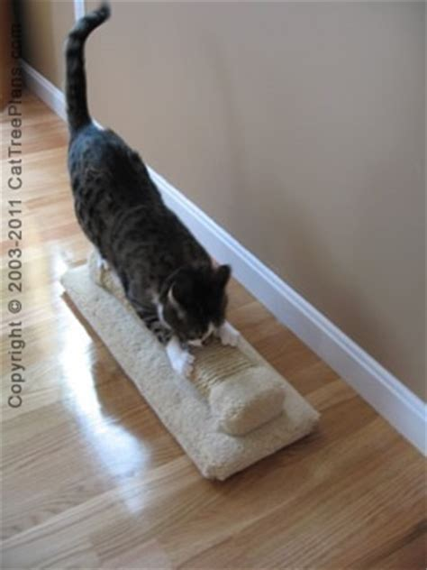 how to stop cat scratching sofa how to stop cats from scratching carpet floor matttroy