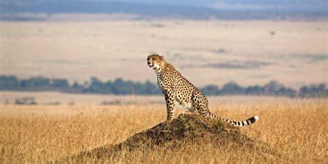 National Geographic Wildlife wildlife encounters national geographic lodges